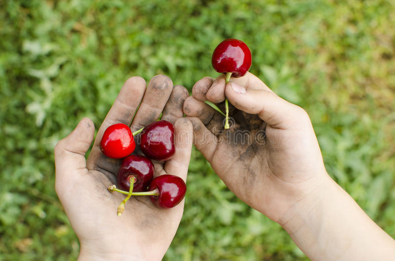 Smutsa ner händer med frukt Barn hygien, begreppet av riktigt hy arkivfoton