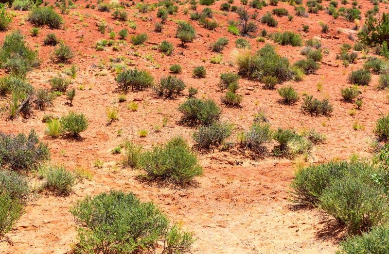 smutsar den växande växten för död green en ho royaltyfri foto