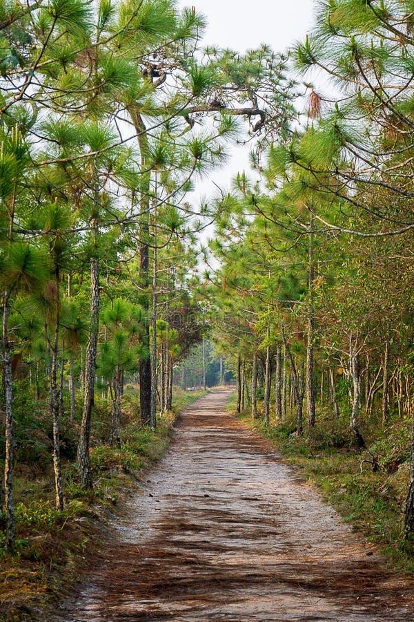 Smutsbana och att sörja bakgrund för trädtunnelnatur royaltyfri fotografi