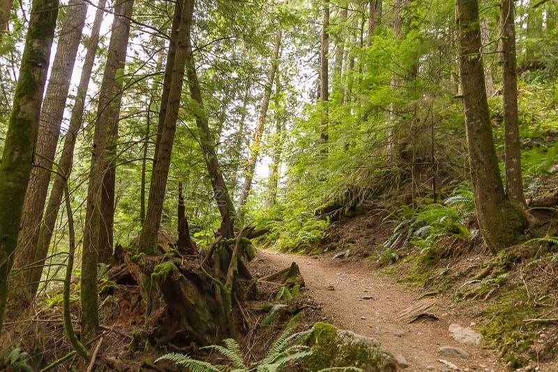 smutsbana som leder till och med eftermiddag i skog fotografering för bildbyråer