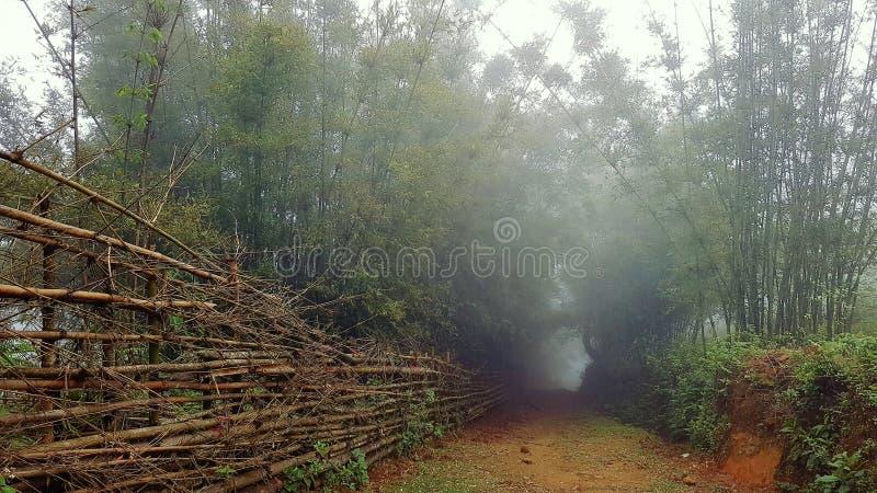 Smutsbana till och med bambu royaltyfri foto