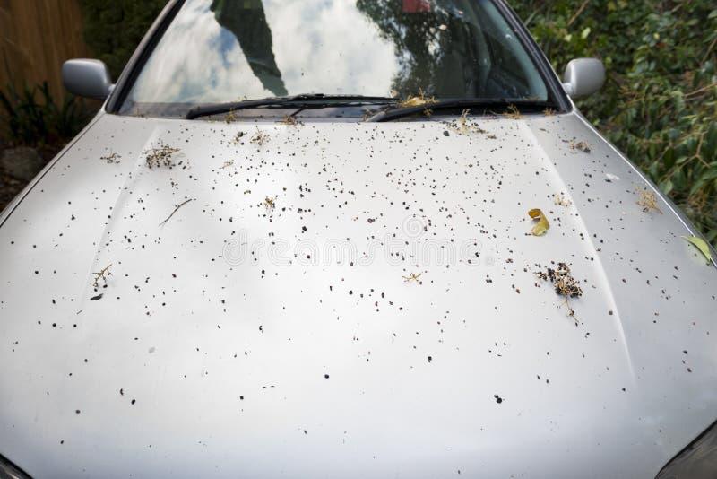 smutsig bil arkivfoto