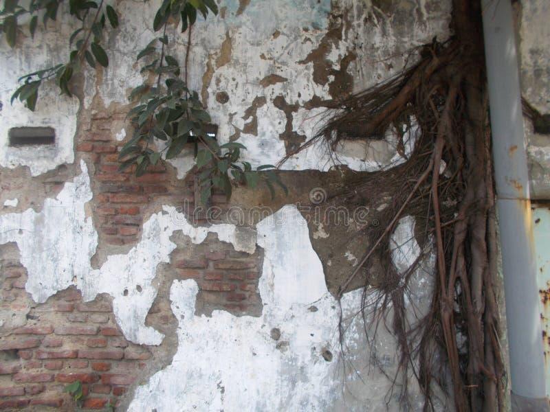 Smutsig gammal brickwall som är ful och royaltyfri fotografi