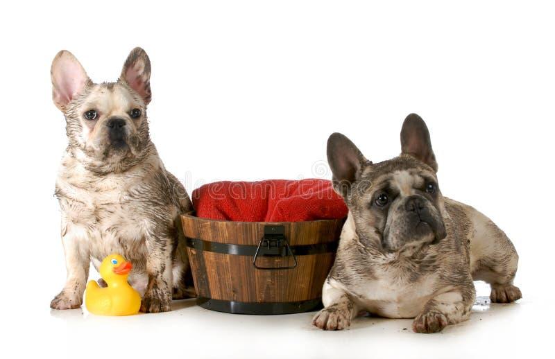 Smutsig hundkapplöpning royaltyfri foto