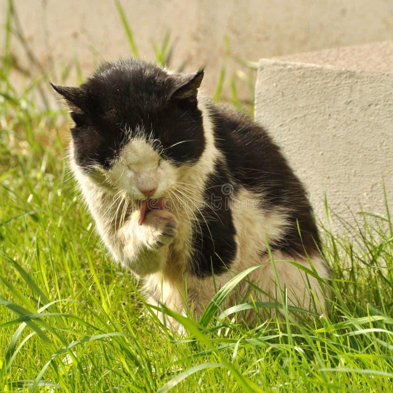 smutsig katt royaltyfria bilder