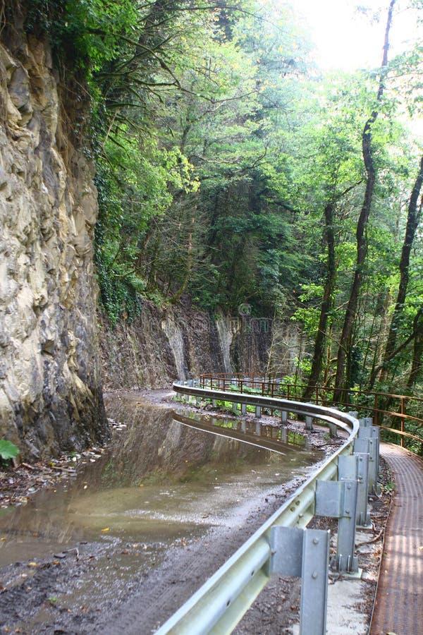 Smutsig väg för jordning i bergskogen efter regnet, foto av naturen arkivfoto