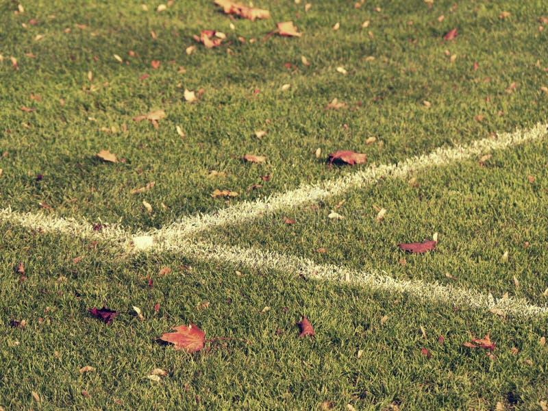 Smutsigt fotbollfält med färgrika höstlönnlöv Bakgrundsslut för grönt gräs upp arkivfoto