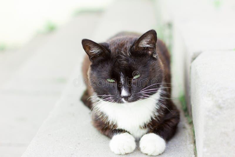 Smutsigt kattsammanträde för härlig hemlös på farstubron arkivfoto