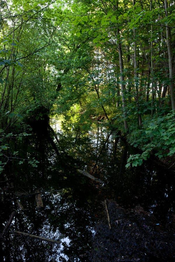 Smutsigt vatten för trädreflexion royaltyfria foton