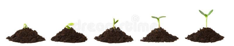 smutsstaplar planterar följd royaltyfri foto