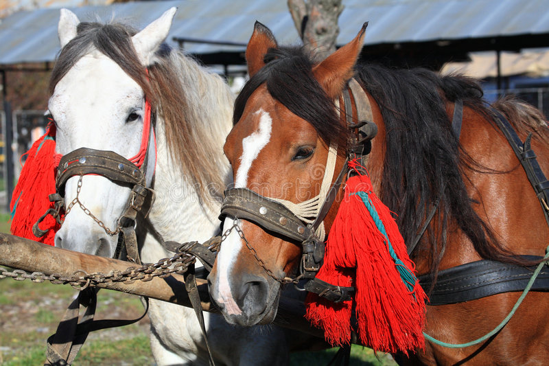 smyckade hästar royaltyfri fotografi