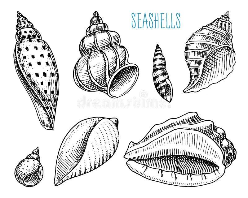 Snäckskal eller olika former för mollusca Havsvarelse den inristade handen som dras i gammalt, skissar, tappningstil nautiskt ell royaltyfri illustrationer