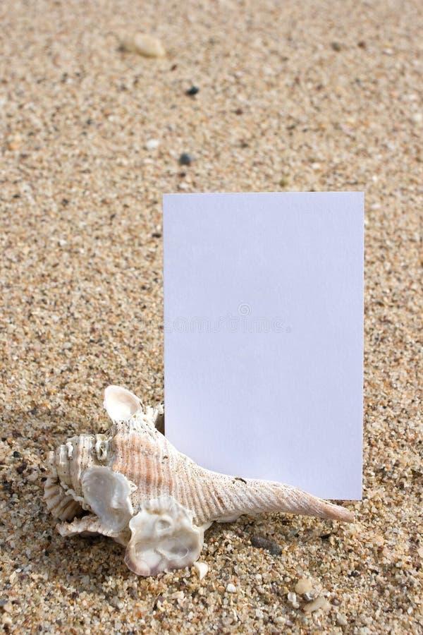 snäckskal för strandkortnamn royaltyfri fotografi