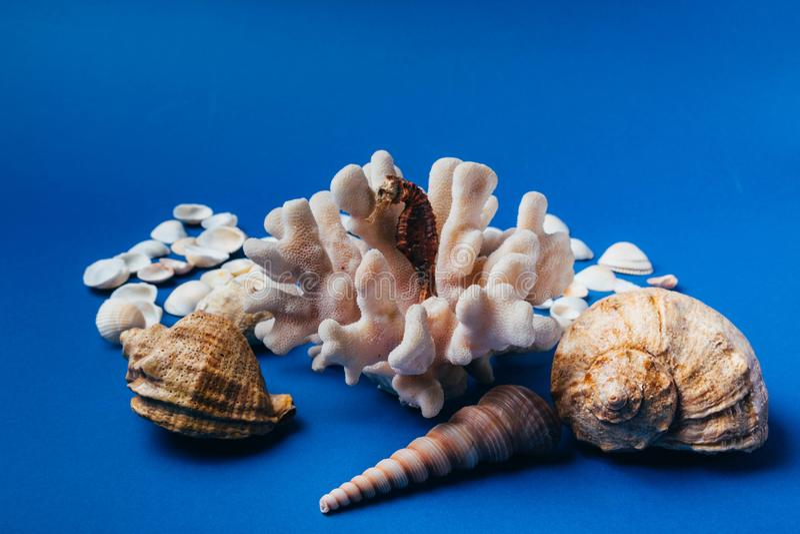 Snäckskal havshäst, korall på en blå bakgrund, flatpley royaltyfria foton