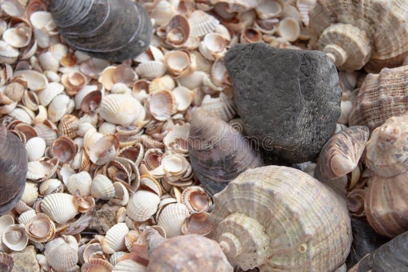 Snäckskal, havsskal - texturer eller bakgrunder - olika kiselstenar, stenar och hinder arkivbilder