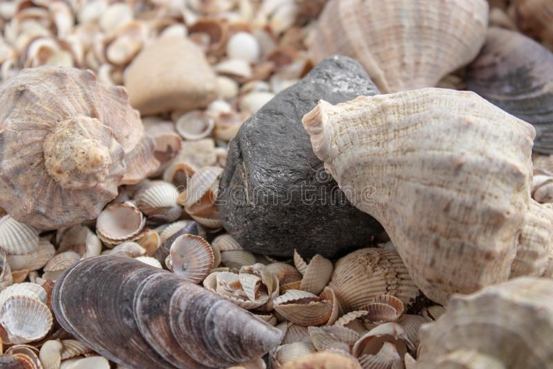 Snäckskal, havsskal - texturer eller bakgrunder - olika kiselstenar, stenar och hinder royaltyfri foto