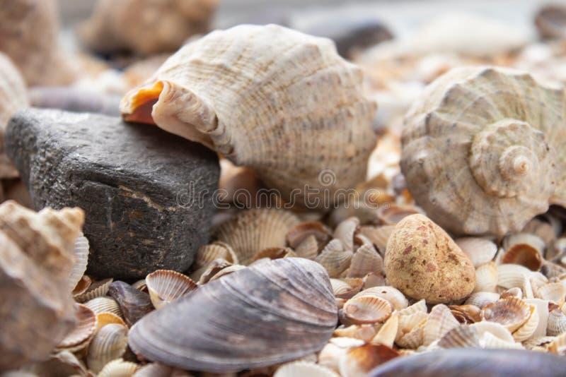 Snäckskal, havsskal - texturer eller bakgrunder - olika kiselstenar, stenar och hinder royaltyfria foton