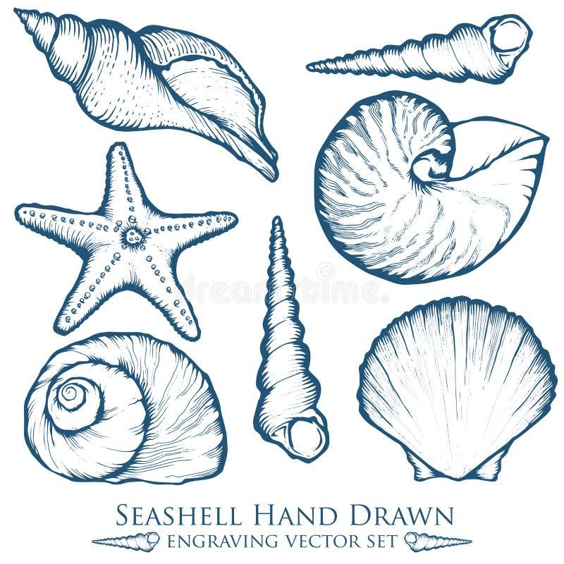Snäckskal havsskal, uppsättning för vektor för sjöstjärnanaturhav vatten- undervattens- Räcka den utdragna marin- gravyrillustrat vektor illustrationer