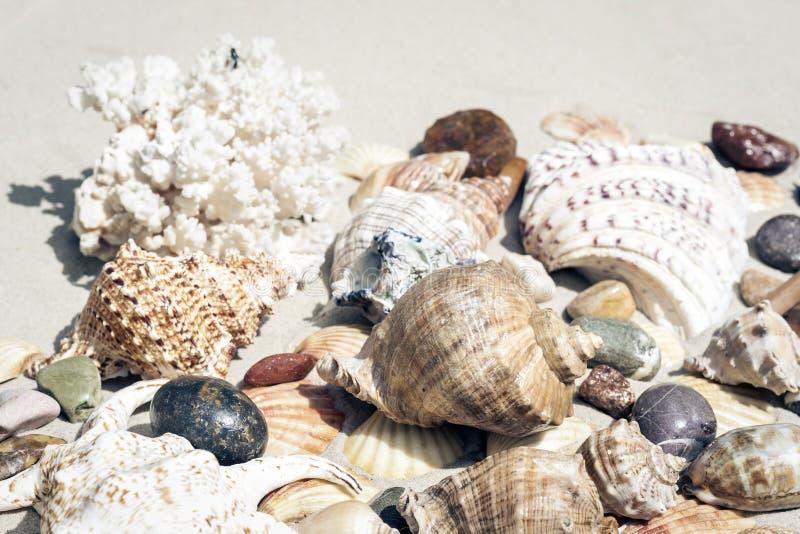 Snäckskal, havsstjärnor, korall och stenar på sanden, begrepp för lopp för sommarstrandbakgrund med kopieringsutrymme för text royaltyfri foto