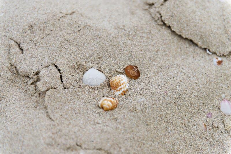 Snäckskal i sanden på stranden royaltyfri bild