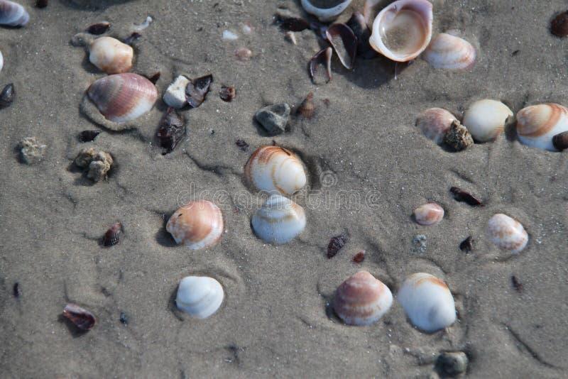 Snäckskal i strandsanden royaltyfri foto