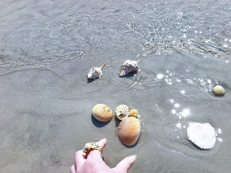 Snäckskal- och havsstenar räcker fingrar tar låssnäckskalet i sommar för vattenhavvatten för att semestra den tropiska stranden f arkivbild