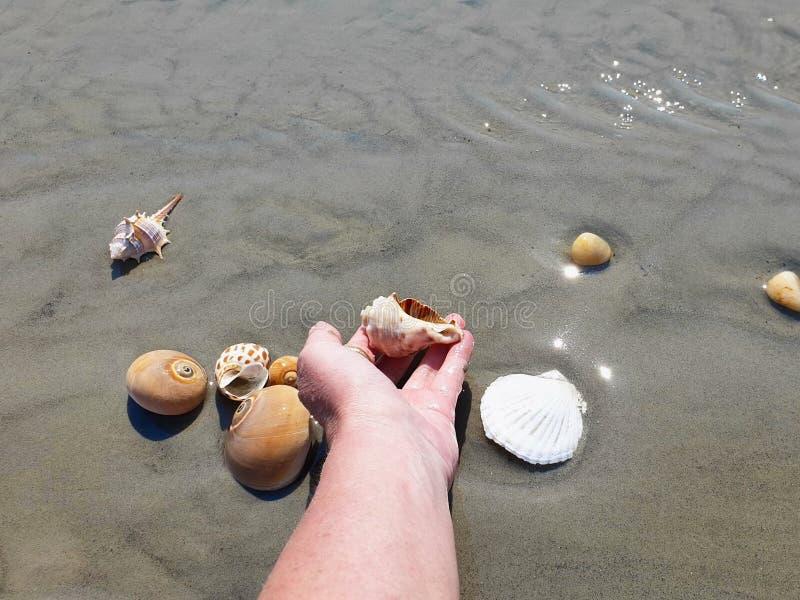 Snäckskal- och havsstenar räcker fingrar tar låssnäckskalet i sommar för vattenhavvatten för att semestra den tropiska stranden f royaltyfri fotografi