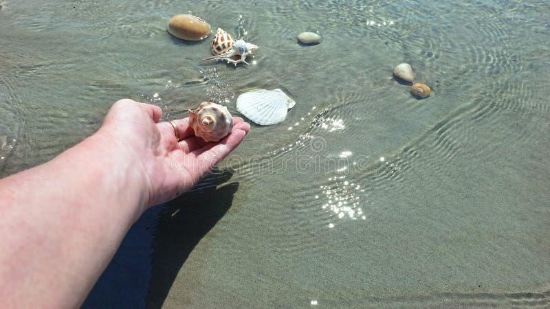 Snäckskal- och havsstenar räcker fingrar tar låssnäckskalet i sommar för vattenhavvatten för att semestra den tropiska stranden f arkivfoton