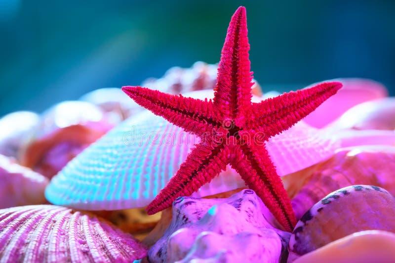 Snäckskal och sjöstjärna fotografering för bildbyråer