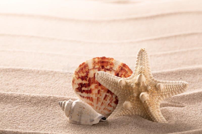 Snäckskal och sjöstjärna på strandsand royaltyfria foton