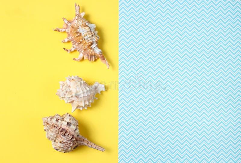 Snäckskal på en idérik blå gul bakgrund, sommartid, minimalism, bästa sikt royaltyfria foton