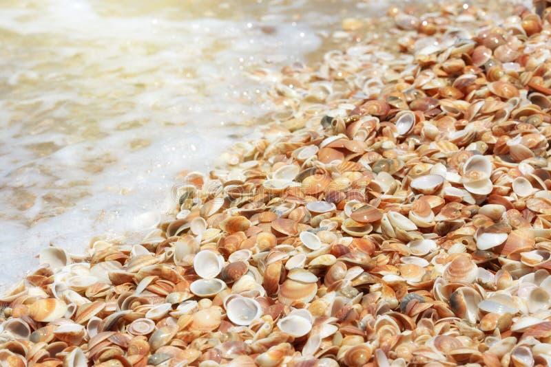Snäckskal på en sandig strand nära havet arkivbild