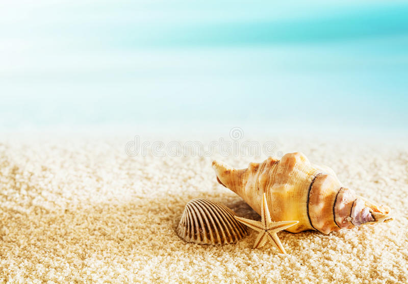 Snäckskal på en tropisk kust arkivfoto