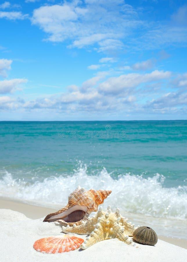 Snäckskal på en vit sandstrand som vågorna plaskar in arkivbild