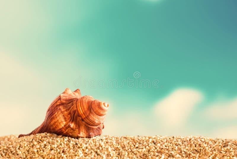 Snäckskal på guld- strandsand royaltyfri foto