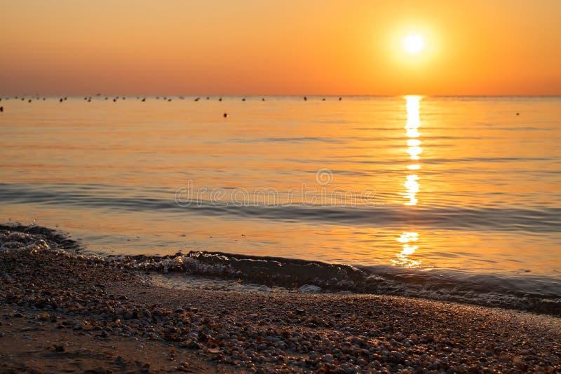 Snäckskal på havsstranden mot bakgrunden av en färgrik gryning Fokuskontroll fotografering för bildbyråer
