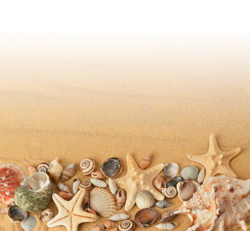 Snäckskal på sand arkivbilder