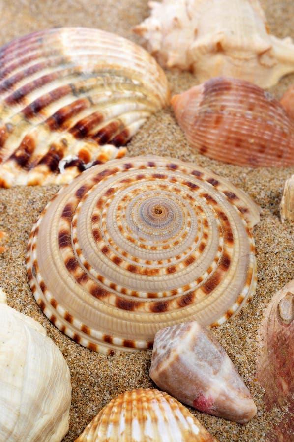 Snäckskal på sanden av en strand royaltyfri foto