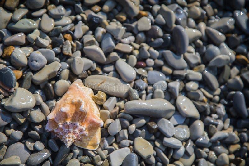 Snäckskal på sanden och Pebble Beach vid havet royaltyfria foton