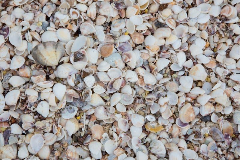Snäckskal på sandstranden arkivbild