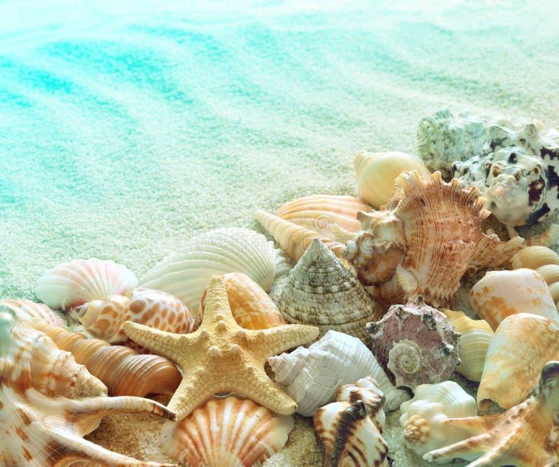 Snäckskal på sommarstranden med sand royaltyfri fotografi