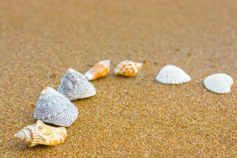 Snäckskal på stranden 25 royaltyfri fotografi
