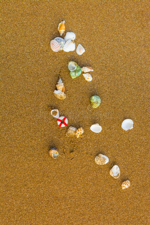 Snäckskal på stranden 10 arkivfoton