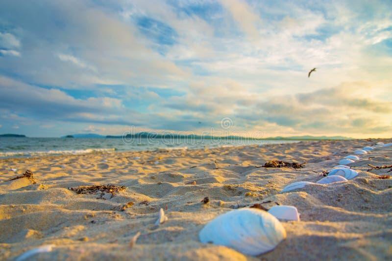 Snäckskal på stranden som tänds upp av solen Många skal på den vita sanden royaltyfria bilder