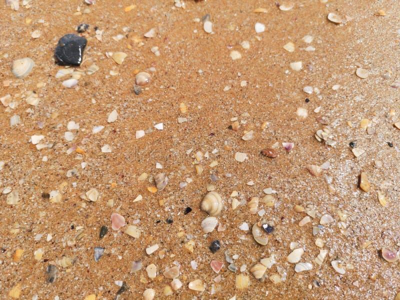 Snäckskal på våt sand arkivfoto