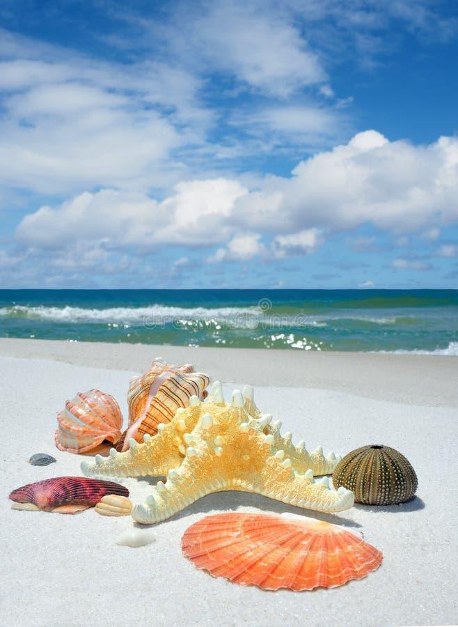 Snäckskal, sjöstjärna och havsgatubarn på en härlig vit sand Bea fotografering för bildbyråer