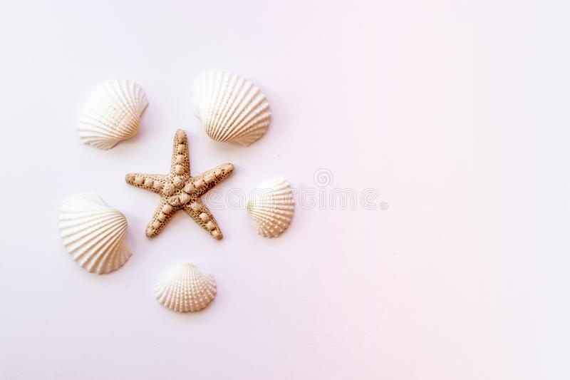 Snäckskal sjöstjärna på pastellfärgad rosa bakgrund sommar f?r sn?ckskal f?r sand f?r bakgrundsbegreppsram B?sta sikt, kopierings fotografering för bildbyråer