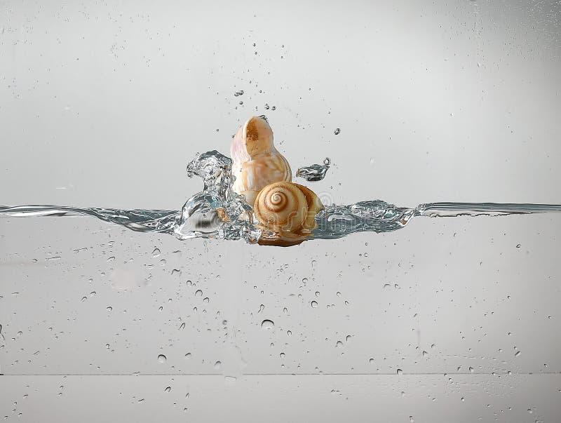Snäckskal som droping i vattnet fotografering för bildbyråer
