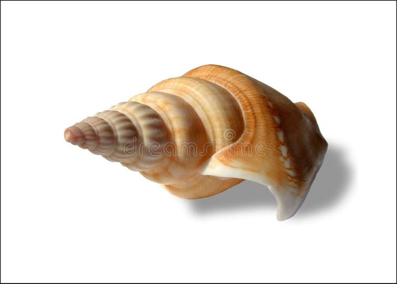 snäckskalspiral royaltyfri foto