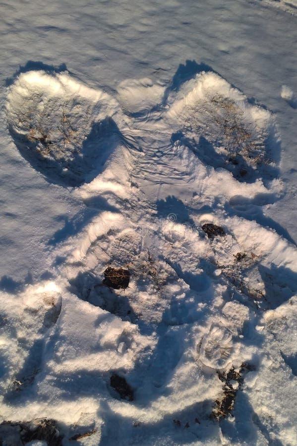 Snöänglar fotografering för bildbyråer